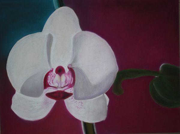Copie-de-orchidee.jpg
