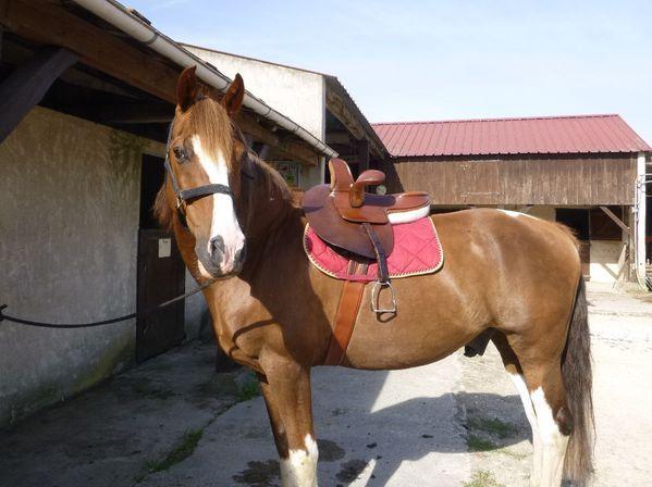 cheval-selle-amazone.JPG
