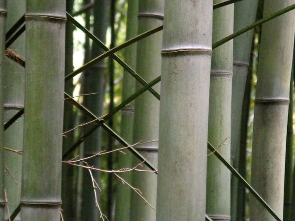 bambouseraie-anduze-137.JPG