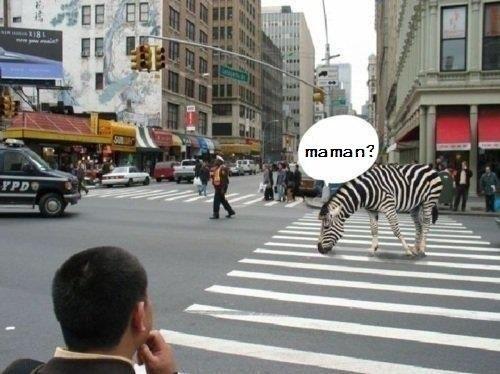 maman.jpg