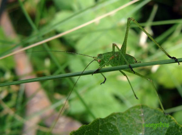 2010-07-29 oise - insectes - travaux 026