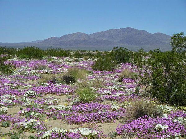 fleurs-dans-desert-7.jpg