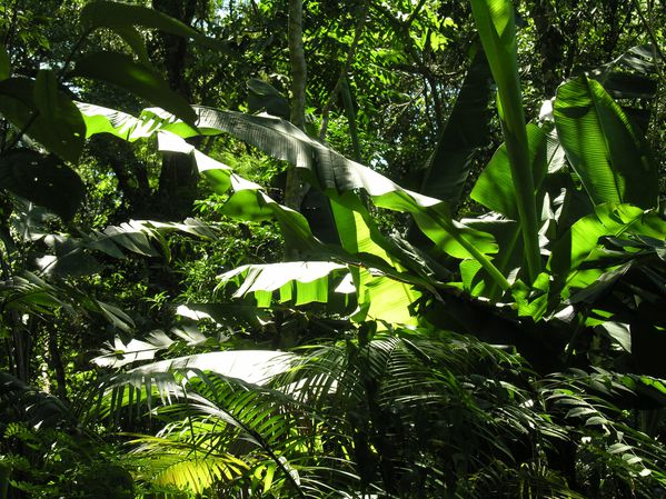 Bresil Foret Tropicale 111