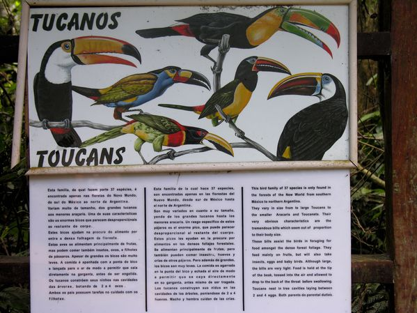 bresil Iguazu Toucans0