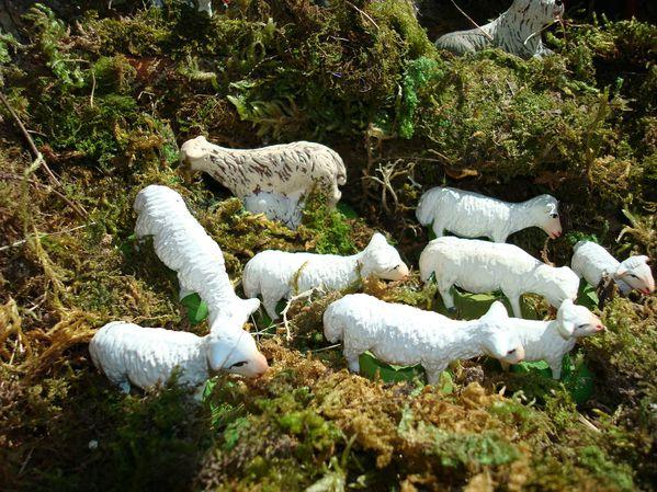 transhumance moutons 045