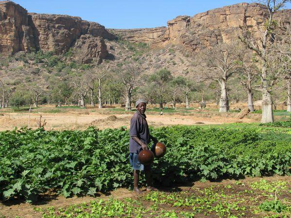 semaine au Pays Dogon Mali 232