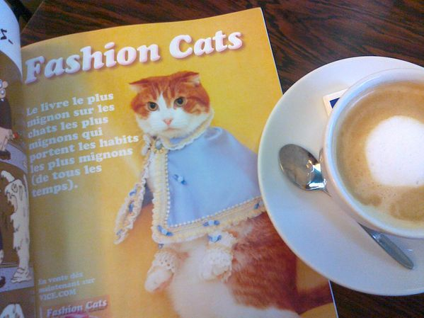 Fashion-Cats-17122011.jpg