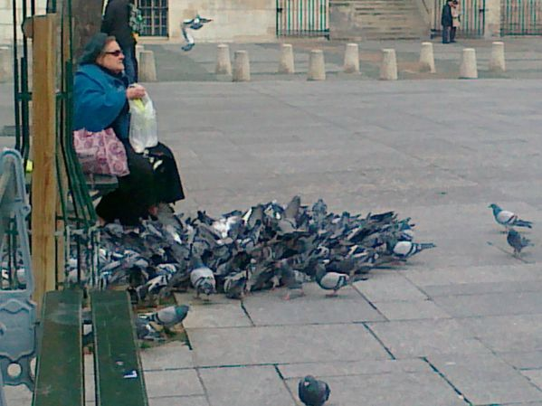 Madame-Pigeons-10-01-2012-place-st-sulpice.jpg