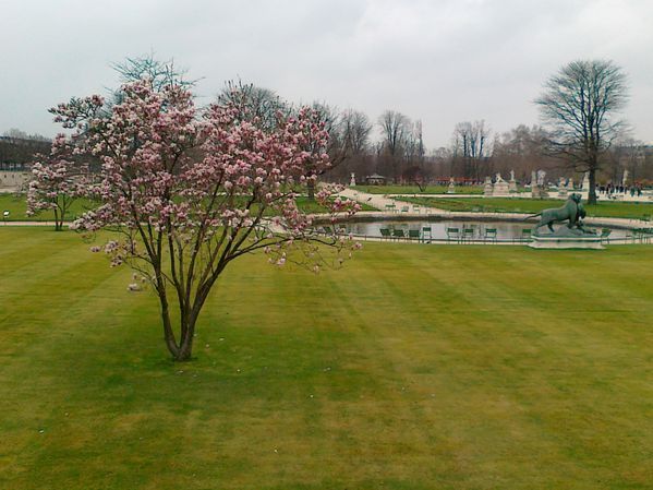 Magnolia-For-Ever-Tuileries-17032012.jpg
