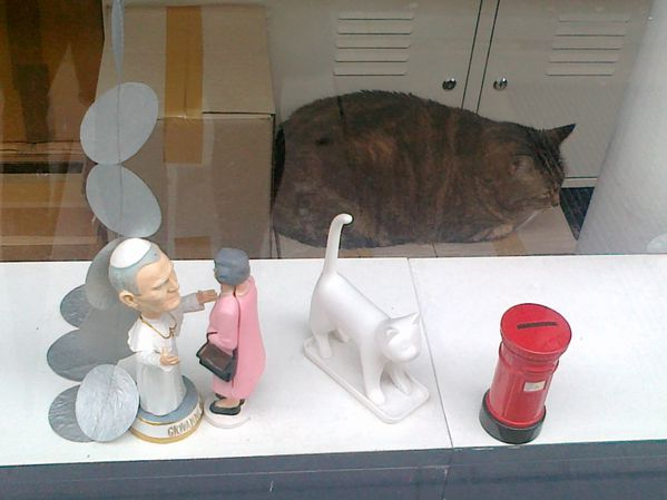 le-chat-scope-11052012.jpg