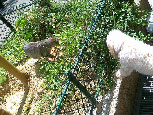 chien-et-chat-01072012.jpg