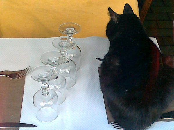 le-chat-01072012.jpg
