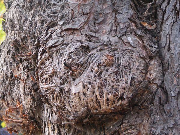 roots-056.JPG