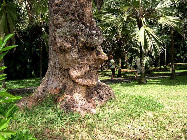 020 Botanic garden Seewoosagur Ramgoolam C