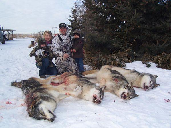 loups morts fourrure
