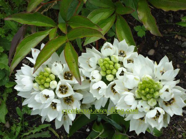 été 2012 dessus fleurs blanches
