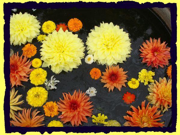2012-09-21 bouquetBIS amarantes - sjdb 083