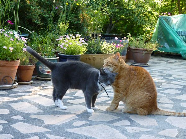 CONVERSATIONS ET CALINS ENTRE CHATS
