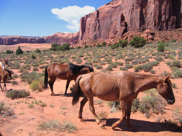 Monument Valley chevaux