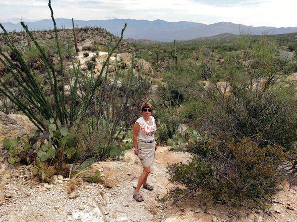 Tucson Saguaro NP Est 8 Martine (2)-copie-1