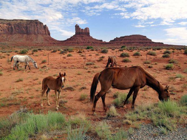 Monument-Valley-chevaux-copie-3.jpg