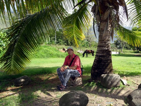 Marquises Hiva Oa Norbert cheval