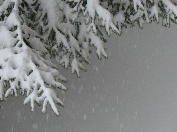 neige (19) [800x600]