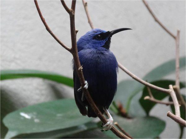 oiseau zoo de stuttgart