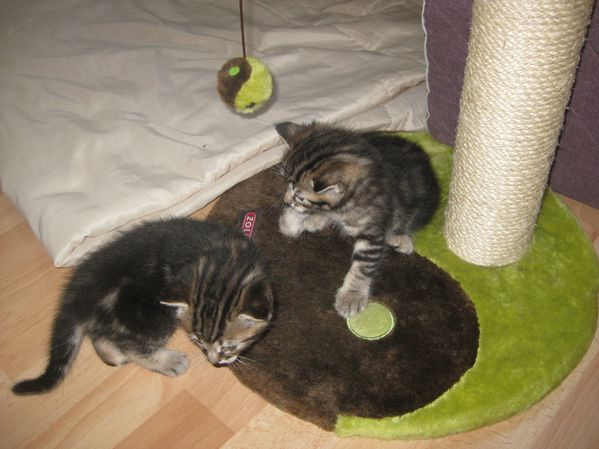 Chats-et-chatons-0001.JPG