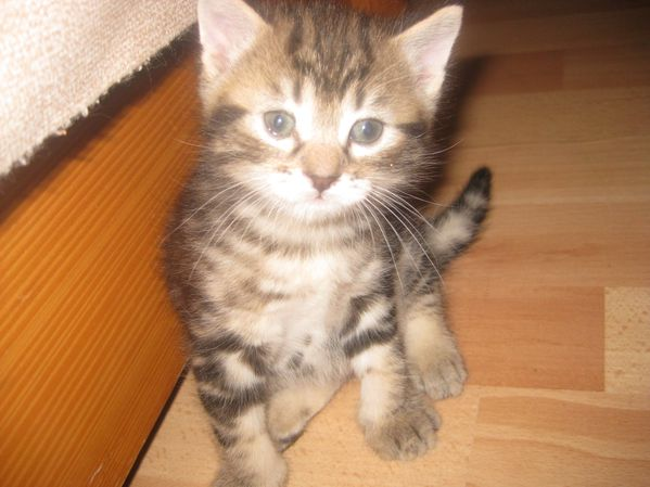 Chats-et-chatons-0008.JPG