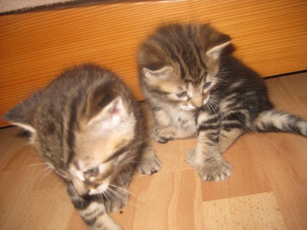 Chats-et-chatons-0011.JPG