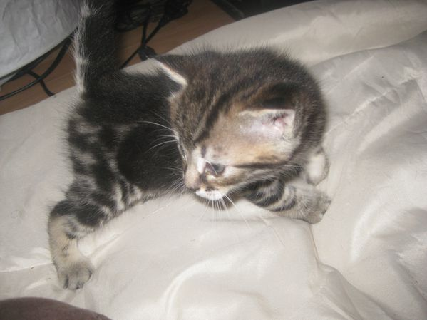 Chats-et-chatons-0012.JPG