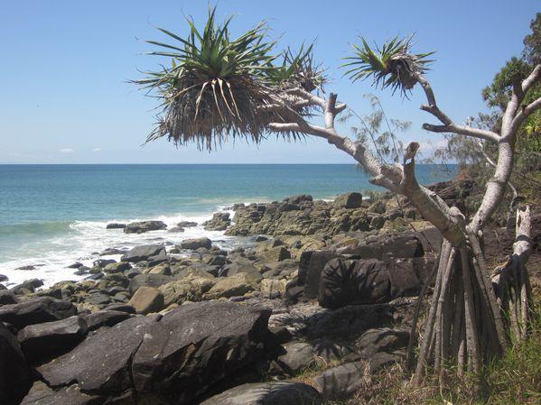 Noosa--Sunshine-Coast 1018