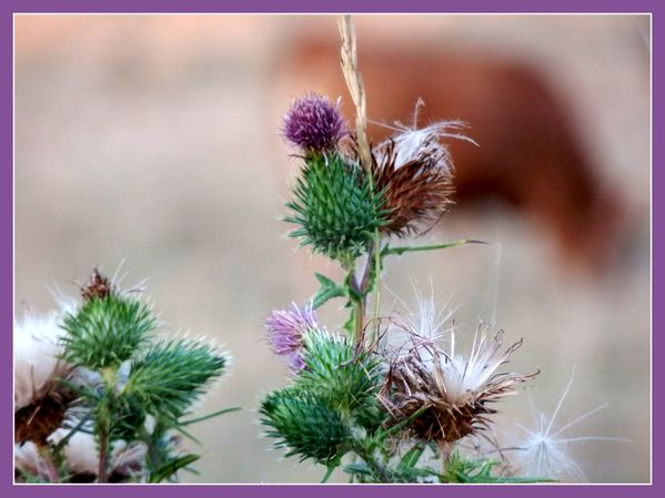 Divers,fleurs et insectes.Jipé (56)