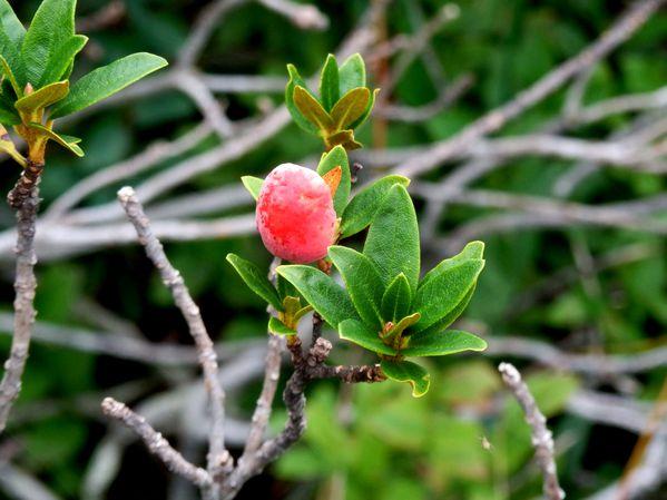 Montagne.Flore et faune (3)