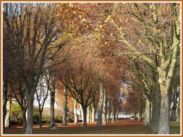 BSS.RD.Automne. (2)