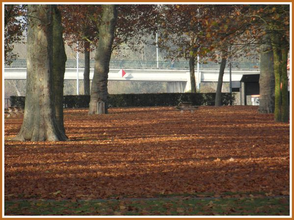 BSS.RD.Automne. (4)