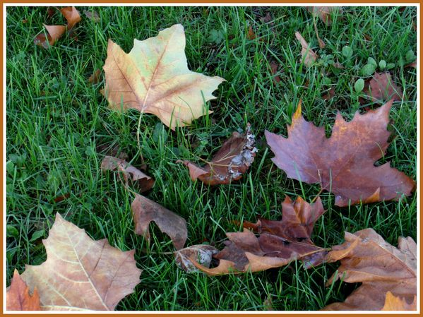 BSS.RD.Automne. (5)