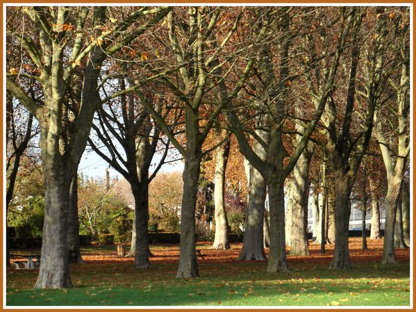 BSS.RD.Automne. (6)