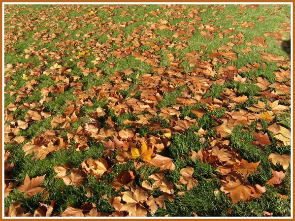 BSS.RD.Automne. (7)