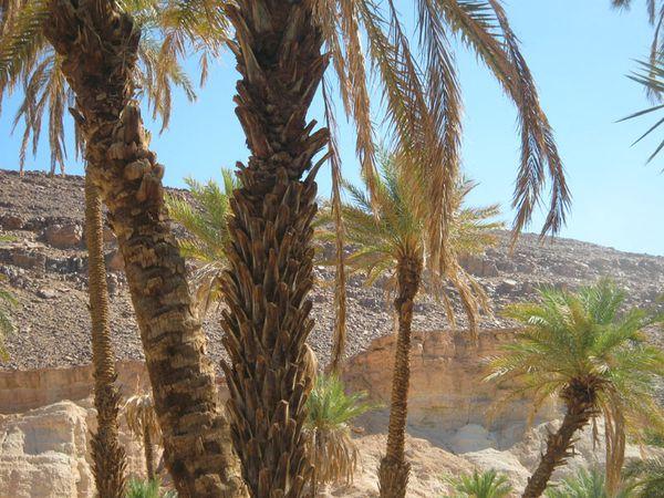 Maroc 10-09 Nicolas 088