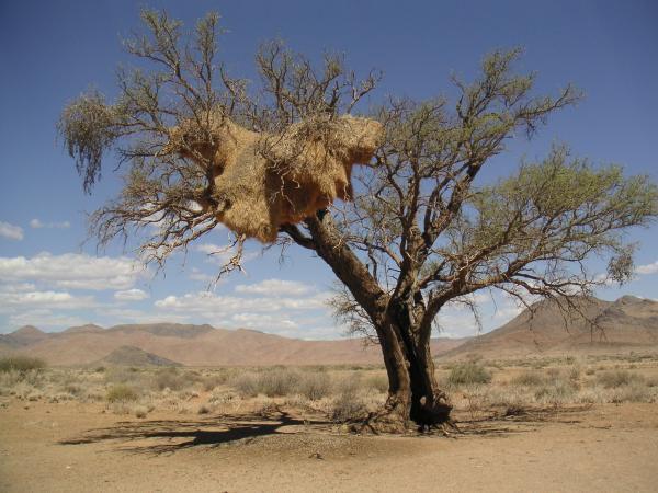 namibie-republicains-sociaux.jpg