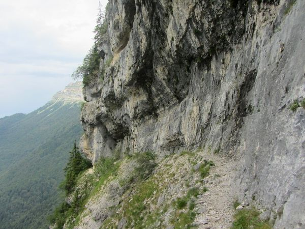 Chartreuse (17)