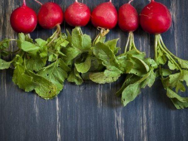 13603134-le-radis-est-un-legume-racine-comestible-de-la-qui.jpg
