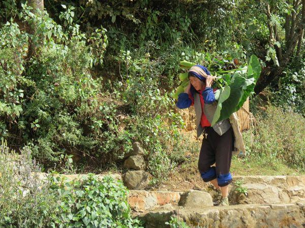 Yuanyang dans les rizières - 06