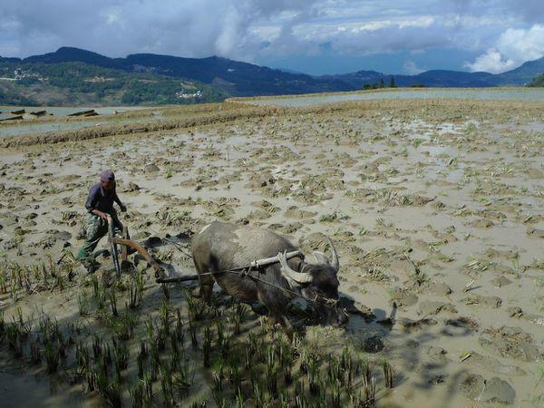 Yuanyang dans les rizières - 11