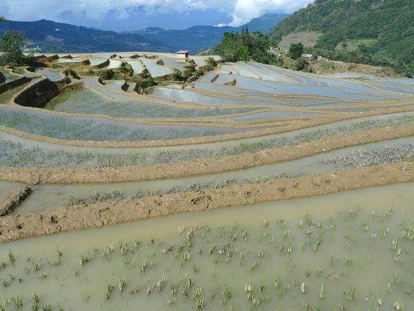 Yuanyang dans les rizières - 12