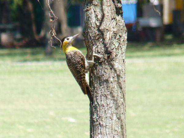 P1070301b oiseau