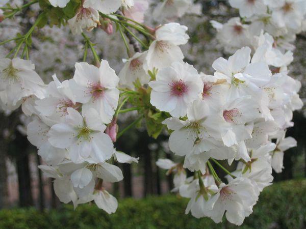 mes-fleurs 2210