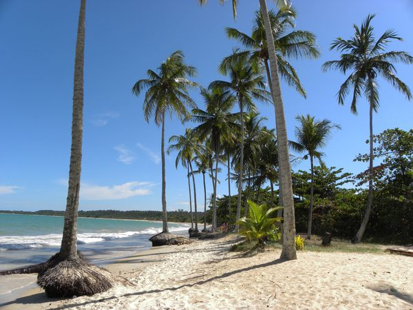 Bresil Bahia Troncoso Plage Cocotiers 1
